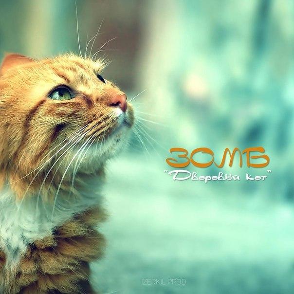 Зомб - Дворовый кот